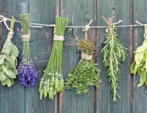 Températures de vaporisation des plantes de phytothérapie