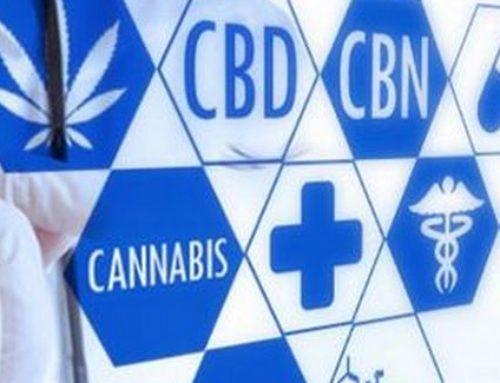 Les principaux cannabinoïdes du cannabis et leur action thérapeutique